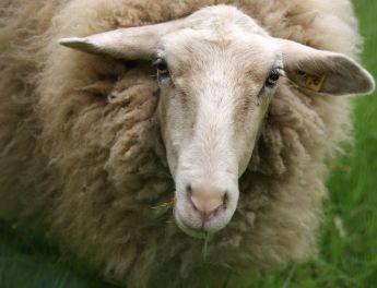 5.000 de oi scoase la plimbare printr-o capitală europeană